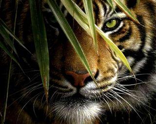Обои на телефон тигр, лицо, король, животные, дикие