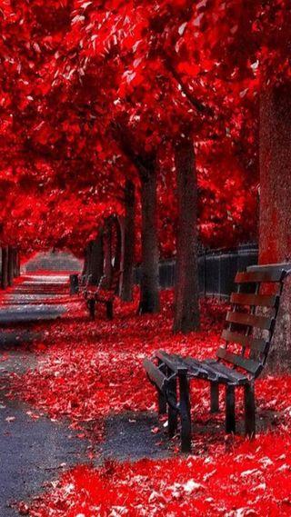 Обои на телефон пейзаж, красые