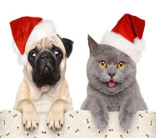 Обои на телефон санта, счастливое, собаки, рождество, кошки, друзья, christmas friends