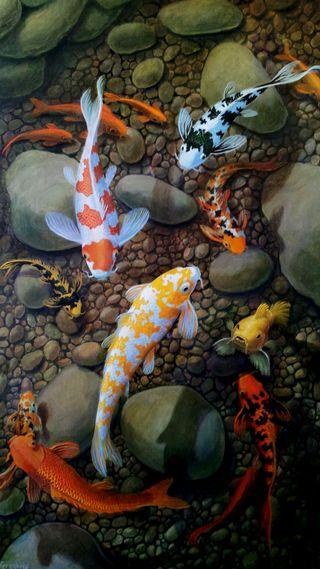 Обои на телефон рыба, клоун, камни, pool, koi