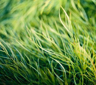 Обои на телефон трава, цветные, свет, оригинальные, новый, зеленые, one2, one 2, one, m8, htc m8 original-3, htc