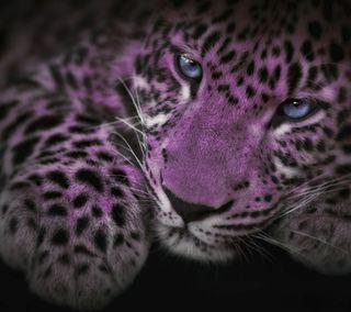 Обои на телефон ягуар, хищник, цветные, фиолетовые, синие, прекрасные, кошки, животные, глаза, арт, ps, blue and purple, art
