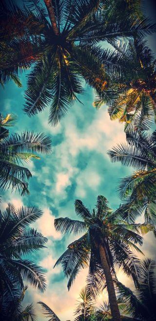 Обои на телефон bel air palms, природа, прекрасные, красочные, пальмы, закат