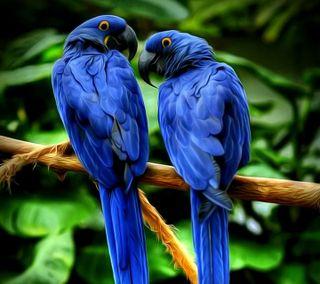 Обои на телефон попугай, синие, любовь, классные, love, blue parrot, 2016