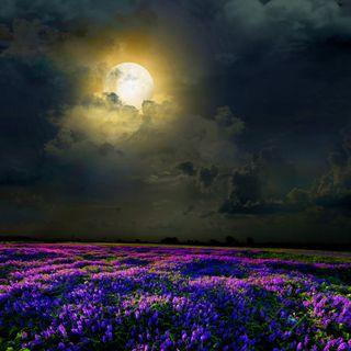 Обои на телефон поле, цветы, фиолетовые, свет, природа, ночь, луна