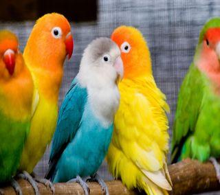 Обои на телефон попугай, цветные