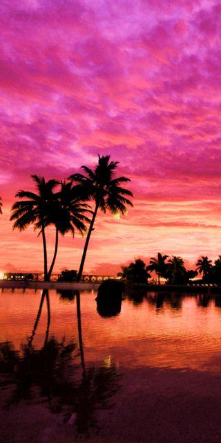 Обои на телефон пальмы, закат