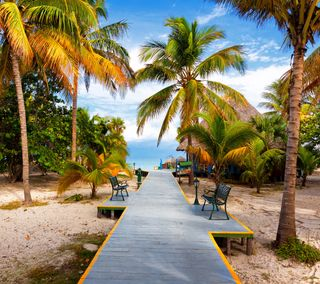 Обои на телефон рай, путь, песок, пальмы, океан, дерево, пляж, море, берег, path shore