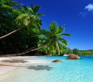 Обои на телефон пальмы, тропические, рай, пляж, море