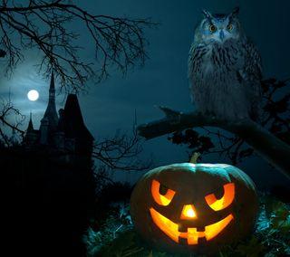 Обои на телефон тыква, хэллоуин, счастливые, страшные, сова, ночь, happy
