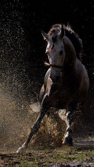 Обои на телефон сильный, прекрасные, лошадь, вода, бег