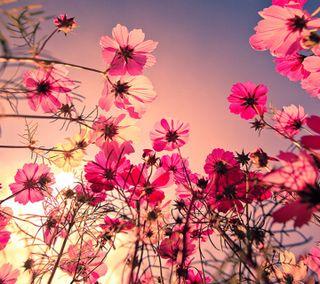 Обои на телефон цветы, приятные