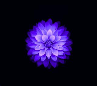 Обои на телефон лотус, эпл, цветы, фиолетовые, абстрактные, ios, apple