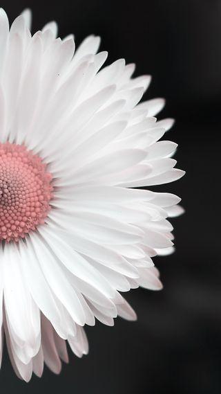 Обои на телефон цветы, белые