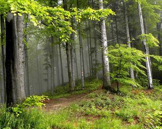 Обои на телефон джунгли, лес, деревья