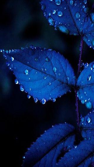Обои на телефон листья, синие