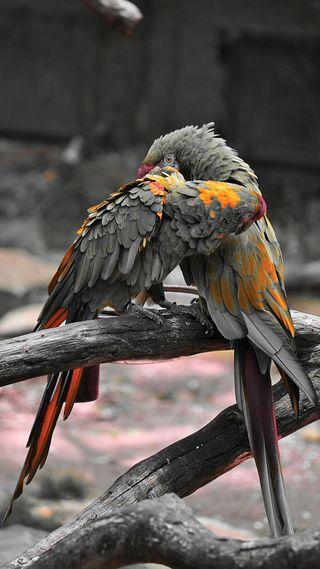 Обои на телефон love, love birds, любовь, цветные, птицы, попугай