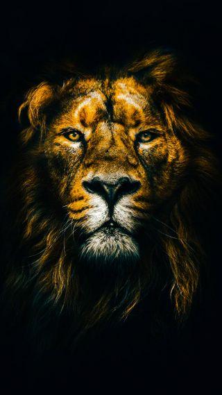 Обои на телефон лев, король, желтые, голова, yellow lion head, piece, land