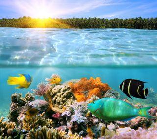 Обои на телефон подводные, тропические, рыби, море, кораллы, reef