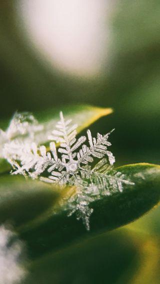 Обои на телефон снежинки, снег, зима, зеленые, город, zwinter18, zsnow18, green snowflake