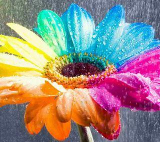 Обои на телефон подсолнухи, цветы, цветные, красочные, colorful sunflower