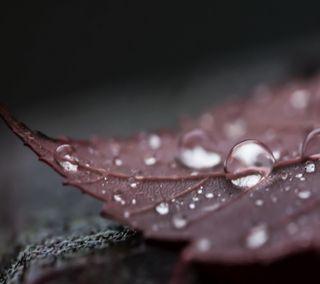 Обои на телефон листья, капли, вода, leaf hd