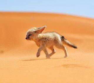 Обои на телефон пустыня, лиса