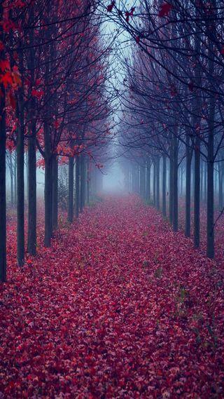 Обои на телефон красые, деревья, осень, листья, лес, на улице, спокойные