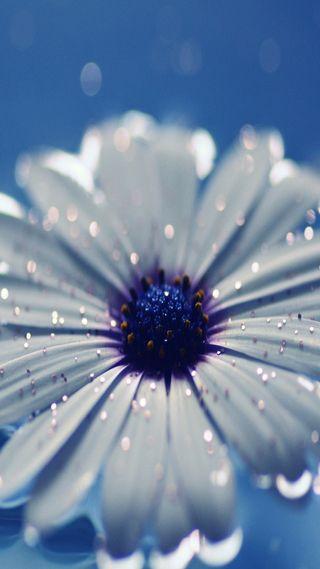 Обои на телефон изображение, цветы, фон, приятные, природа, крутые, белые, white flower, hd