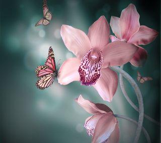 Обои на телефон бабочки, цветы, розовые, природа