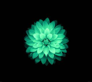 Обои на телефон лотус, цветы, цветные, приятные, прекрасные, зеленые