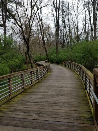 Обои на телефон спокойные, прогулка, лес, peaceful walk, boardwalk