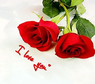 Обои на телефон лепестки, цветы, ты, романтика, розы, приятные, природа, новый, любовь, крутые, красые, love, i love you