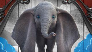 Обои на телефон слон, милые, малыш, лицо, hd, cute baby elephant