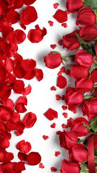 Обои на телефон лепестки, романтика, розы, любовь, красые, валентинка, valentine roses, love