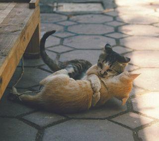 Обои на телефон обнимать, коты