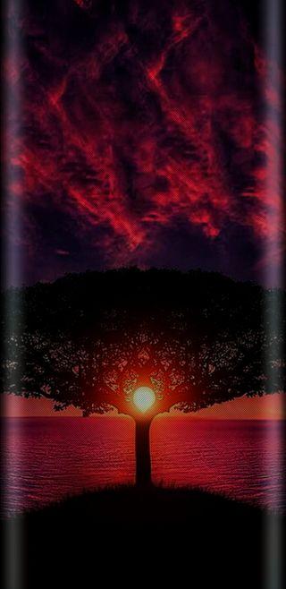 Обои на телефон яркие, фиолетовые, солнце, свет, розовые, прекрасные, океан, закат, дерево, afternoon