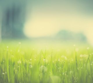 Обои на телефон макро, трава, боке