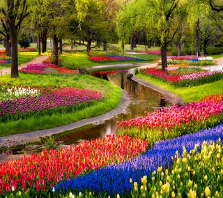 Обои на телефон тюльпаны, цветы, сад, река, растения, дерево