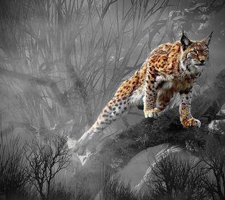 Обои на телефон хищник, природа, охота, лес, кошки, дикие, lynx