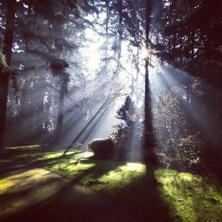 Обои на телефон лес, фото, свет, природа, прекрасные, light in the woods