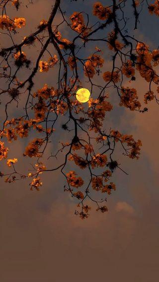 Обои на телефон осень, оранжевые, ноябрь, луна, листья