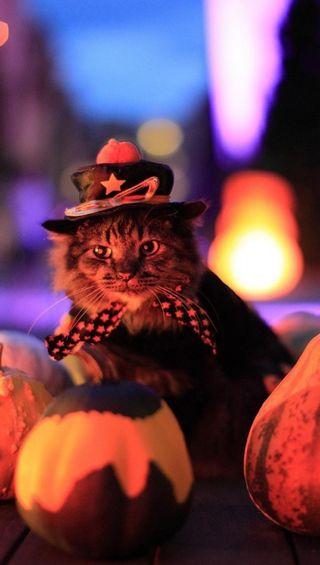 Обои на телефон тыква, хэллоуин, кошки
