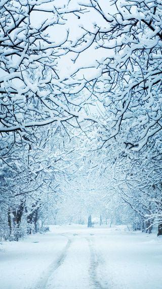 Обои на телефон парк, снег, рождество, путь, природа, праздник, зима, декабрь