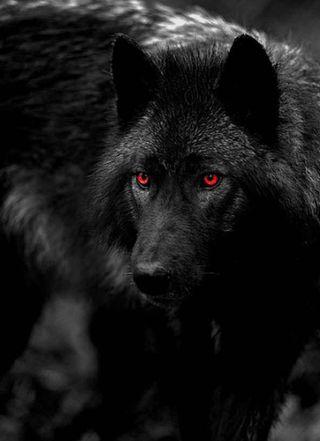 Обои на телефон черные, красые, волк, red eyed, black red eyed wolf