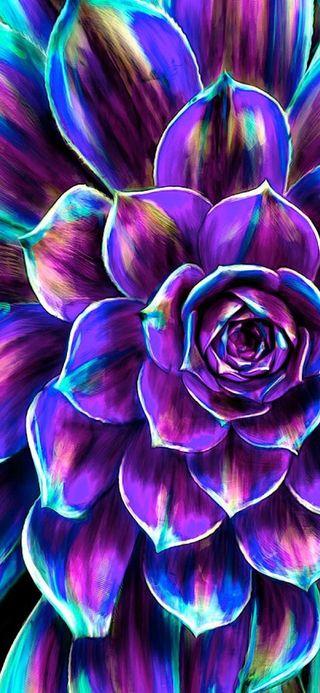 Обои на телефон лотус, цветы, фиолетовые, розовые, радуга, красочные