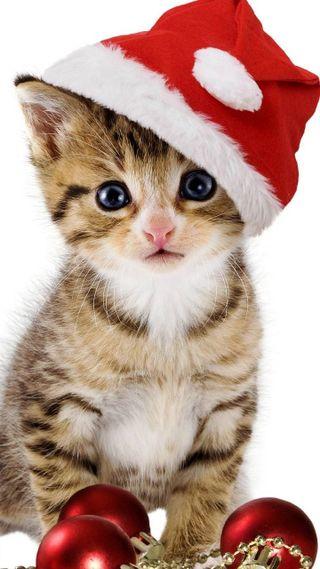 Обои на телефон рождество, кошки, котята, animas