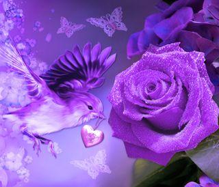 Обои на телефон цветы, фиолетовые, розы, птицы, природа