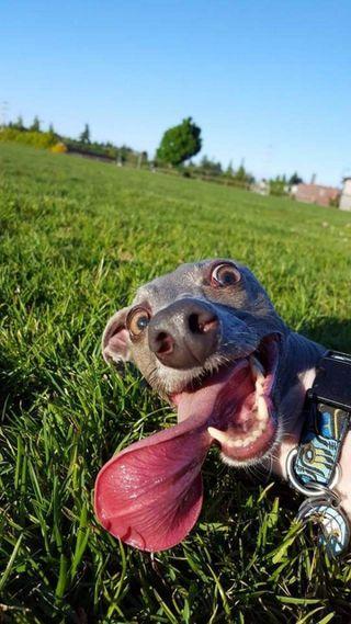 Обои на телефон funny dog, happy, love, swag, любовь, забавные, супер, счастливые, солнце, собаки, лето, смайлики, фан, щенки