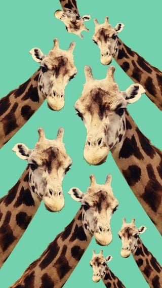 Обои на телефон странные, природа, коллаж, забавные, жираф, животные, g raf, funky
